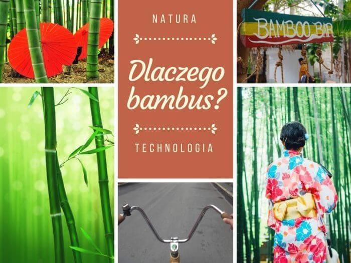 Dlaczego bambus natura technologia