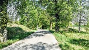 Z rowerem na Mazury droga drzewa