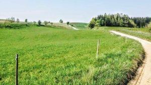 Z rowerem na Mazury droga łąka